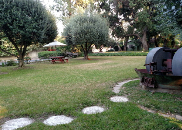 Peaceful lawn fringed with redwoods and olive trees