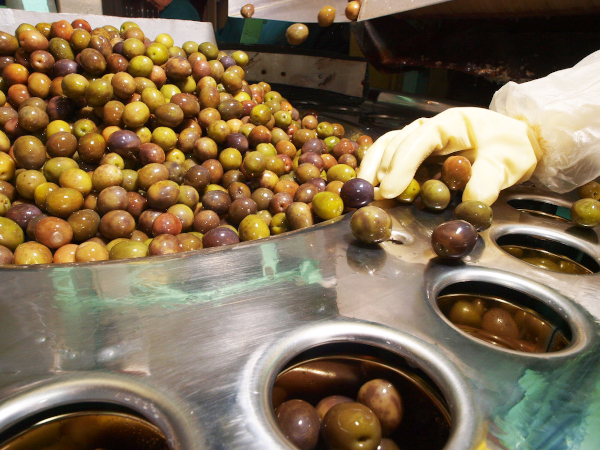 Canning the olives